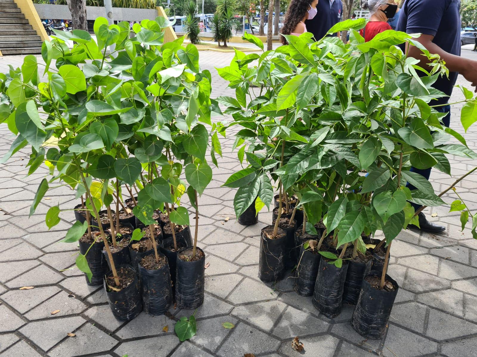 Dia da Árvore é comemorado com distribuição de mudas no Centro de Campina Grande